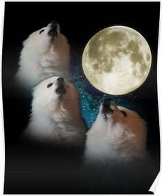 Gabe The dog 3 Three Moon Wolf moon eskimo internet sensation tee t-shirt Funny Animal Pictures, Funny Animals, Cute Animals, Dog Memes, Funny Memes, Funny Blogs, Funny Pics, Funny Stuff, Hilarious