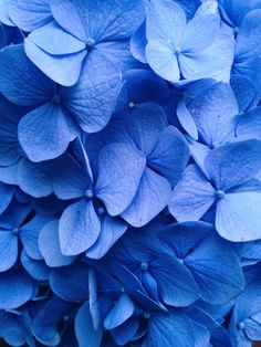 Light Blue Aesthetic, Blue Aesthetic Pastel, Aesthetic Colors, Flower Aesthetic, Summer Aesthetic, Love Rose Flower, Hydrangea Flower, Blue Flowers, Beautiful Flowers