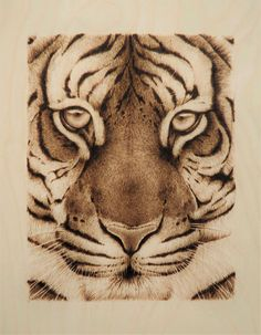 """""""All the Better to Eat you With"""" Tiger Face Pyrography/Woodburning by Cara Jordan Wood Burning Crafts, Wood Burning Patterns, Wood Burning Art, Wood Crafts, Wood Burn Designs, Wood Burning Techniques, Dream Catcher Art, Tree Stencil, Pyrography Patterns"""