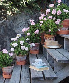 1,630 отметок «Нравится», 7 комментариев — Rose (@_rosebook_) в Instagram Porch Plants, Porch Garden, Garden Edging, Garden Landscaping, Green Garden, Diy Flowers, Flower Ideas, Cottage Style, Garden Inspiration