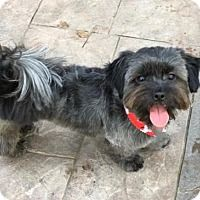 Adopt A Pet :: Lucky Lou - Spring, TX