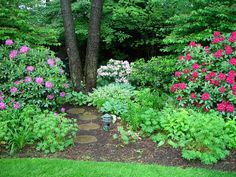 For the path, cement stepping-stones dyed and cast to resemble the cross-sections of large tree trunks. Rhododendron 'Roseum Elegans' on the left, 'Nova Zembla' in red at right. Foreground: cranesbill geranium hybrids & variegated hostas.