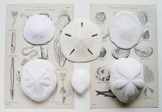 ocean treasures. My siblings and cousins and I used to have fun looking at Grandpa's sand dollar collection.  I even started one myself when I was younger.