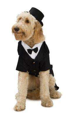 Dapper Dog Tuxedo Pet Costume, Large Rubie's  #halloween #costumes #halloweencostumes #petcostumes #dogcostumes #dogs #pets #animals #perros #animales #trajes #animalesdecompañía #ropaparaperros