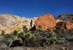 Gold Butte National Monument -- Whitney Pockets | by snowpeak *Mohave Arizona
