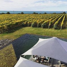 #LonelyPlanet writer @tasminwaby is on the road in #NewZealand and lucky enough to be sipping on crisp salt-air infused Sauvignon Blanc at @ElephantHill in the North Isalnd's Hawke's Bay. For any wine connousiers out there this is one of the wineries featured in our book Wine Trails which provides itineraries for 52 perfect weekends in wine country around the world. It covers everything from household names in Spain and France to the emerging frontiers of winemaking in Lebanon and Georgia…