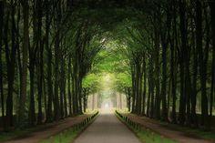 Amazing Tree Lined Path 5