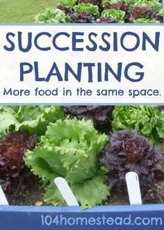 Succession Planting: Growing More In the Same Space | The 104 Homestead