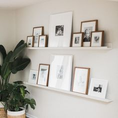 One of my favorite parts about our home; my two 8 ft gallery wall shelves filled… One of my favorite parts about our home; my two 8 ft gallery wall shelves filled with 7 years of our memories ✨My best friend made these… Gallery Wall Shelves, Picture Shelves, Shelves For Pictures, Ikea Picture Ledge, Photo Shelf, Frames On Shelf, Decorative Wall Shelves, Office Wall Shelves, Hanging Pictures On The Wall