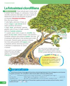 from Urra 4 Reading Practice, Italian Language, Kids Education, Make It Simple, Herbs, Science, Vacation, Learning Italian, Languages