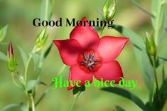 A collection of Beautiful Good Morning Images, beautiful good morning pictures, whatsapp good morning images and quotes. Sweet Good Morning Images, Morning Images In Hindi, Good Morning Picture, Morning Pictures, Phone Wallpaper Quotes, Friends Image, Happy Birthday Images, Cool Baby Stuff, Picture Quotes
