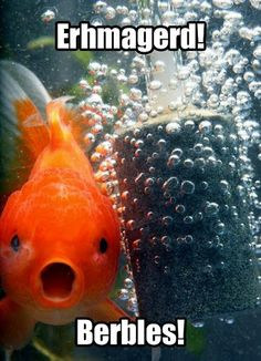 Check out: Animal Memes - Surprised goldfish. One of our funny daily memes selection. We add new funny memes everyday! Bookmark us today and enjoy some slapstick entertainment! Haha Funny, Funny Cute, Funny Stuff, Funny Things, Funny Shit, Freaking Hilarious, Random Stuff, Hilarious Memes, Awesome Things