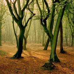 Hoge Veluwe, The Netherlands
