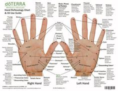 Hand & Foot reflexology chart indicating possible essential oil uses for various reflex points. Itメs great used as reference, education, or for class handouts. Essential Oil Chart, Essential Oils For Pain, Essential Oil Uses, Melissa Essential Oil, Essential Tremors, Foot Chart, Hand Reflexology, Reflexology Points, Acupressure Points In Hand