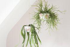 diy plante retombante ceramique heju