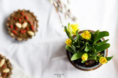 Raw avocado tarts with dates :: readeat.pl