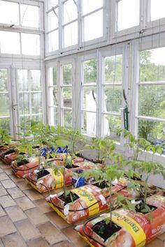 Ideas for cheap mini greenhouse for DIY garden ideas and seed starting Vegetable Garden Planning, Backyard Vegetable Gardens, Veg Garden, Vegetable Garden Design, Outdoor Gardens, Hydroponic Gardening, Container Gardening, Gardening Hacks, Organic Gardening