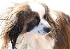 #dogs #animals #hundar #djur# Cute, Photography, Animals, Photo Illustration, Photograph, Animales, Animaux, Kawaii, Fotografie