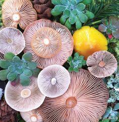 mushrooms-nature