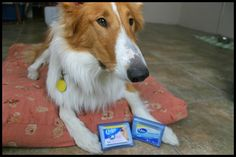 Glad to hear even the Dogs of the World love our PursePack for America's favorite cotton swab, the Q-Tip!