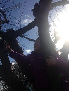 Kuk kuk i æbletræet