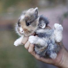Baby Bunny (: