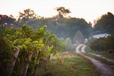 Lailey Vineyard Wines