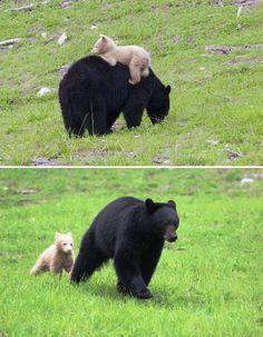 30-adorables-photos-de-mamans-ourses-avec-leurs-oursons-23