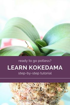 Indoor Vegetable Gardening This is a super helpful tutorial for learning kokedama Orchid Planters, Orchids Garden, Garden Plants, House Plants, Fall Planters, Potted Plants, Indoor Plants, Cement Garden, Patio Plants