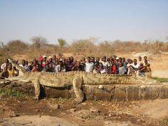 Нигерийская армия нашла и застрелила крокодила, терроризировавшего жителей деревни. Теперь некому будет сожрать нигерийских спамеров :(