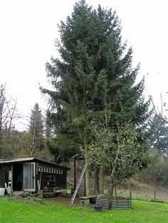 Baum fällen in Stücken Plants, Garden, Garten, Planters, Gardening, Outdoor, Home Landscaping, Plant, Tuin