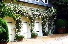 rose covered garage with carriage doors + potted boxwood hedges