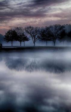 Trees on Foggy Lake
