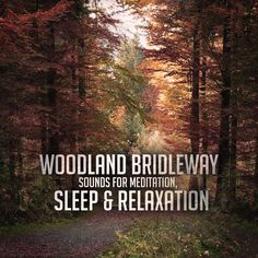 One Hour of Woodland Bridleway Sounds for Meditation, Sleep & Relaxation, by Music2Meditate.org