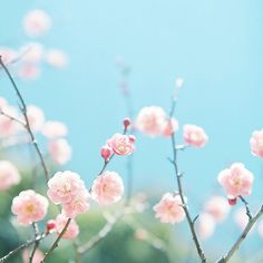 untitled by shabon* on Flickr.