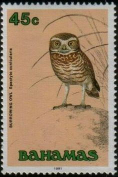 postage stamp of owl-bahamas