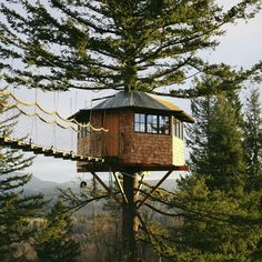 self-built cinder cone treehouse perches above a skate bowl and hot tub