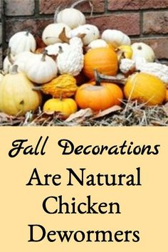 Identifies why fall decorations (like pumpkins, gourds, & squash) are natural chicken dewormers and how to use them to deworm chickens. #Naturalchickendewormer Backyard Poultry, Chickens Backyard, Keeping Chickens, Raising Chickens, Gourds, Pumpkins, Work With Animals, Pet Chickens, Fall Decorations