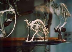 Skeletal Sanctum