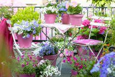 Piante da balcone: tutte le piante e i fiori per un balcone perfetto! | I sempreverdi