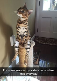 """AWKWARD CAT   Love this! """"For some reason, my sister's cat sits like this every day.""""   WeLoveCatsandKittens.com"""