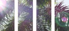 Palm tree glare light outdoors sun trees bright shine palm glare
