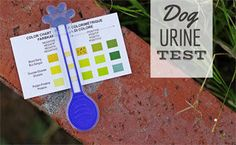 Does your pet have a chronic illness like diabetes or UTI? Find out how you can analyze your dog's urine from the comfort of your home with this easy dog urine test. Dog Nutrition, Nutrition Guide, Dog Uti, Pet Meds, Cheap Pets, Guide Dog, Homemade Dog, Pet Health, Pet Care