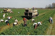 United Farm Workers invite Americans to 'Take Our Jobs' - Jul. 7, 2010