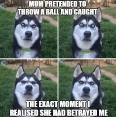 50 Funny Husky Memes That Will Keep You Laughing For Hours #husky #huskymemes #dogmemes #memes #fun - Funny Husky Meme - Funny Husky Quote #husky #funny #funnyhusky -  50 Funny Husky Memes That Will Keep You Laughing For Hours #husky #huskymemes #dogmemes #memes #funnymemes  Lovely Animals World