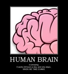 Human Brain - funny pictures - funny photos - funny images - funny pics - funny quotes - funny animals @ humor
