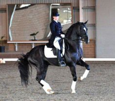 Devon Heir Pirouette (De Niro x Rubinstein). Warmblood stallion. Hanoverian