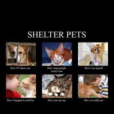 Shelter pets