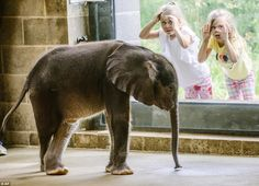 The Pittsburgh Zoo & PPG Aquarium announced on Friday that its new baby elephant is ready ...