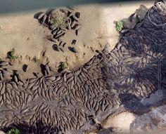 Herd of Hippopotamus, Tanzania Google maps image